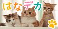 【SP対応】はなデカPET(300円コース)