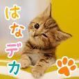 はなデカPET(100円コース)