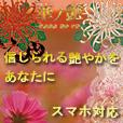 華ノ艶(50円コース)