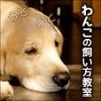 【SP対応】わんこの飼い方教室(500円コース)