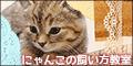 【SP対応】にゃんこの飼い方教室(500円コース)